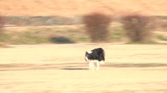 Dog,running5 Stock Footage