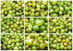 Stock Illustration of Gooseberries