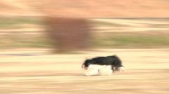 Dog,running2 Stock Footage