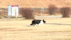 Dog,running1 Stock Footage