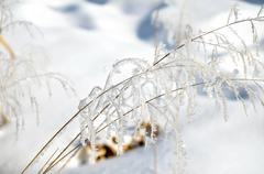 Hoarfrost on branches of herbs Stock Photos
