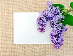 lila säkkiin paperilla - stock photo