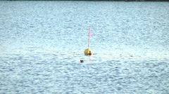 Bird,Waterfowl,River10 Stock Footage