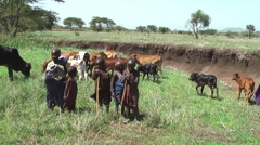 Kids of Masai tribe pasturing cows from the childhood, Tanzania Stock Footage
