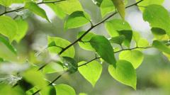Rainy green leafs Stock Footage