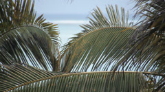 Palm Tree & Turquoise Water Stock Footage