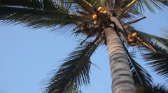 Palm Trees Bottom View Stock Footage