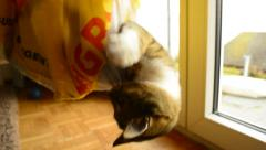 Playful kitten in a bag Stock Footage