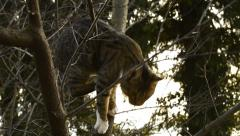 Stock Video Footage of Cat in tree