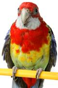 large colorful parrot - stock photo