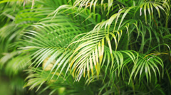 Rainy palm leafs blowing by the wind Stock Footage
