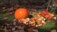 Stock Video Footage of rake leaves pumpkin grass