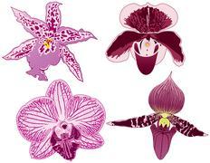 Orchids Stock Illustration