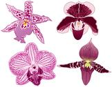 Stock Illustration of Orchids