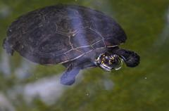 Turtle - stock photo
