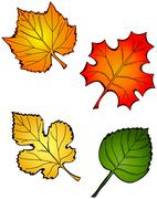 Four fall leaves Stock Illustration
