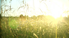 Static shot through the grass at a beautiful sunset. Stock Footage