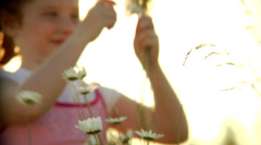 A cute girl plays with flowers in an open field as the sun shines behind her Stock Footage