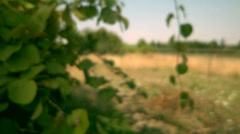 A green leaf on branch blows in the wind Stock Footage