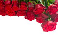 Stock Photo of border of fresh red  garden roses