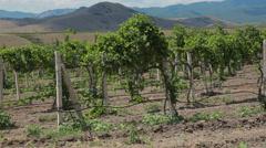 Vineyard Hills Stock Footage