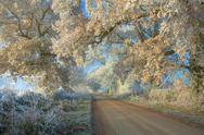 Stock Photo of hoar frost, cotswolds
