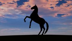 Horse Rise in Sunset Stock Footage