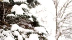 Gracefull Snowfall Stock Footage