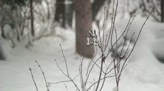 Ice on Branches Stock Footage