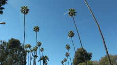 Drive Through Palm Trees In California Stock Footage