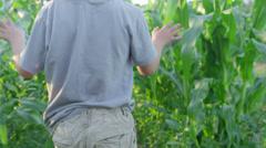 An adorable little boy walks through a field of tall corn plants Stock Footage