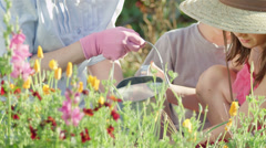 A grandmother and her nephew and niece plant flowers and water them together Stock Footage