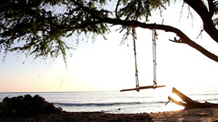 A swing on a tree next to some water Stock Footage