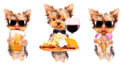 Stock Photo of dog with food and drink