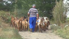 Farmer Walking Herd of Goats, Kids, Lambkin on Rustic, Rural Path in Countryside Stock Footage