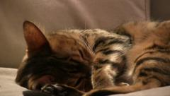 Bengal cat snoozing on cream couch Stock Footage