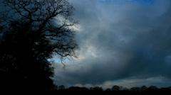 Creepy dark forest Stock Footage