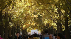 The people roam in the parkway of Temple of Earth, in Beijing,  China Stock Footage