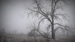 Melancholy Winter Landscape 1 - stock footage