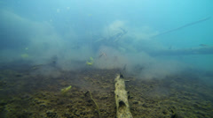 School of perch in a wilderness lake Stock Footage