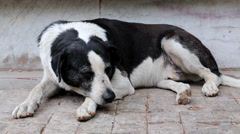Old dog lying on the road in Athens, Greece Stock Footage