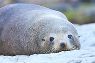 Stock Photo of sea lion