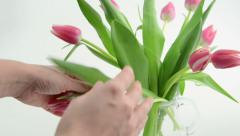 Pink Tulip bouquet is placed in a carafe. Stock Footage