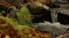 Autumn River stones waterfall focus to front plant - stock footage