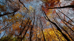 Autumn Forest 360 panorama Stock Footage