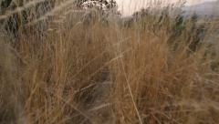 Walk Through the Tall Grass Stock Footage