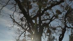Cool Tree - Slider Shot Stock Footage