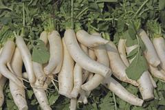 Stock Photo of green vegetable white radish raphanus sativus growing in field, maharashtra,