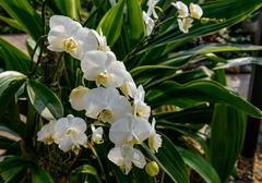 White orchid`s flower inflorescence Stock Photos