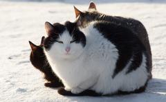 Cat on a snow Stock Photos